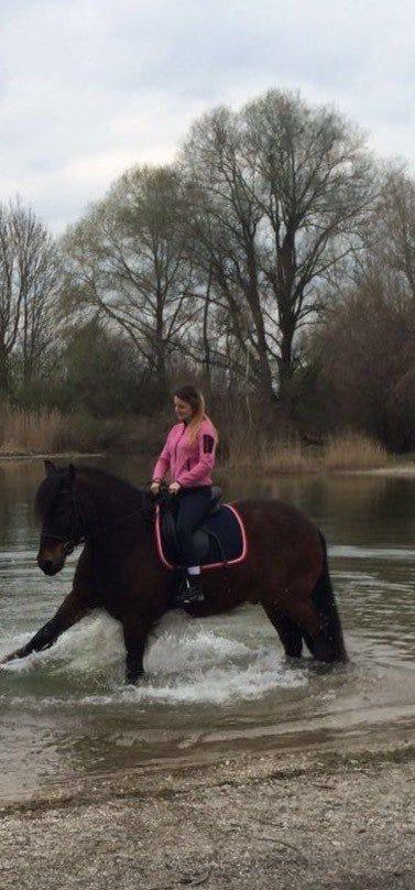 Die Schabracke Classic von Hansbosport am Pferd